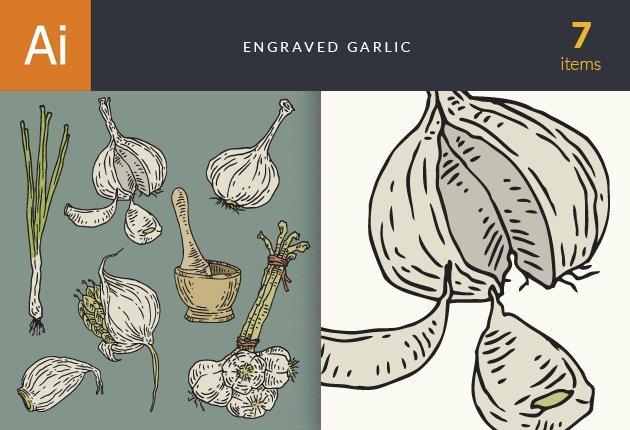 designtnt-vector-engraved-garlic-small